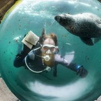 In Pictures: Deep blue clean as aquarium prepares to reopen