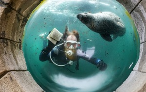 In Pictures: Deep blue clean as aquarium prepares to reopen