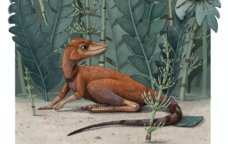 Tiny dinosaur ancestor the size of a mobile phone found in Madagascar