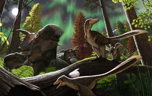 Scientists may have found new dinosaur species that roamed the ancient Arctic