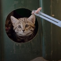 'World's deadliest cats' get first taste of meat at zoo