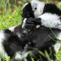 Zoo celebrates arrival of newborn endangered species during lockdown