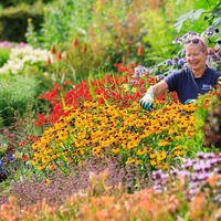 Weather conditions ignite explosion of colour in gardens: RHS