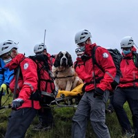 St Bernard rescued from England's highest mountain