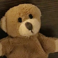 €200 reward offered by tourist for return of beloved teddy bear
