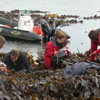 Kelp found in Atlantic Ocean 'has survived since last ice age 16,000 years ago'