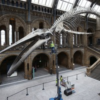 Natural History Museum prepares exhibits for reopening