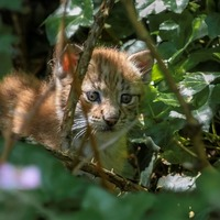 'Inquisitive' lynx kittens at Bristol wildlife attraction to be named by public