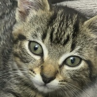 Kitten rescued from three vehicles in one day