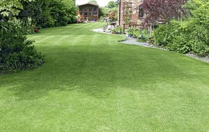 The Casual Gardener: The lawn's days are numbered