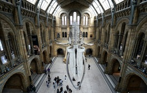 Natural History Museum visitors overjoyed as venue reopens
