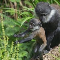 Baby monkey born during lockdown named by Edinburgh Zoo keepers