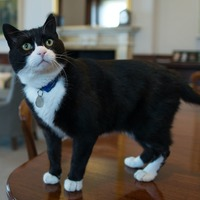 Palmerston the Foreign Office cat to retire from public life