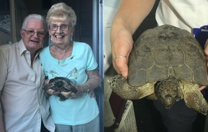 Tortoise who loves headbutting shoes reunited with owners of 50 years