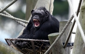 Voice box in primates 'evolved faster' compared with carnivores