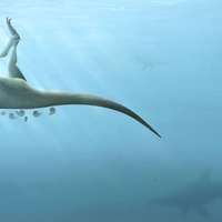 New species of dinosaur discovered on the Isle of Wight