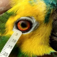Tears of birds and reptiles not much different to human tears, say scientists