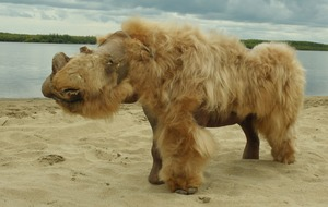 Climate change likely cause of woolly rhinoceros extinction, scientists say