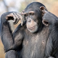Don't be a 'drawdown chimpanzee' when it comes to your pension pot