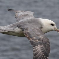 Plastic ingested by seabirds 'could release toxic chemicals in their stomach'
