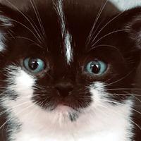 'Adorable' dwarf kitten gets new home