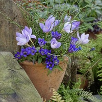 Five plants for colourful pots in autumn garden