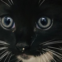 Kitten rescued from under car bonnet after 30-mile journey