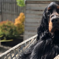 Vet team claims UK first in high-tech human cancer treatment on dog
