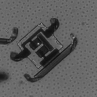 Scientists reveal microscopic robots able to 'walk' by flashing lasers at them