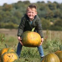 In Pictures: Plumpest pumpkins being picked ahead of Halloween carve
