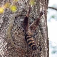 Baboon and raccoon snaps among Comedy Wildlife Photography Award finalists