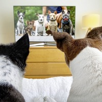 Watching animal programmes or videos can help reduce stress, QUB study finds