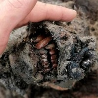 Perfectly preserved Ice Age cave bear found in Arctic Russia