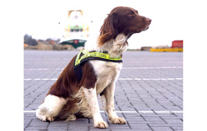 Coronavirus sniffer dogs on patrol at Helsinki Airport
