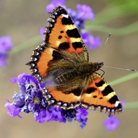 The Casual Gardener: Time to be butterfly aware