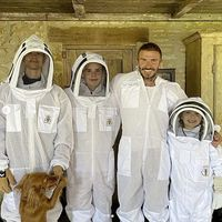Sleb Safari: Bee warned, David Beckham has honey and he means business