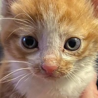 Help! Scared kitten named after John Lennon