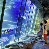 Infrastructure Minister declines request to intervene over plan for new Belfast aquarium