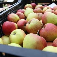 Flavanol-rich diet could help lower blood pressure, scientists say