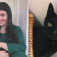 Cat returned to Swansea home after going missing for eight years