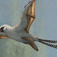 160m-year-old dinosaurs struggled to fly despite bat-like wings, study finds