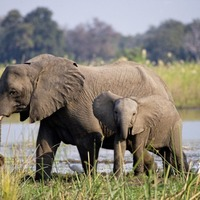 Travel: The race is on to protect Africa's wildlife – here's how to help