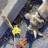 Reward offered for information after firework strapped to wild rabbit