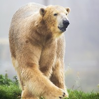 Hamish the polar bear settles in at new home