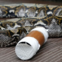 Boa constrictor on the loose surprises cat owner putting out her washing
