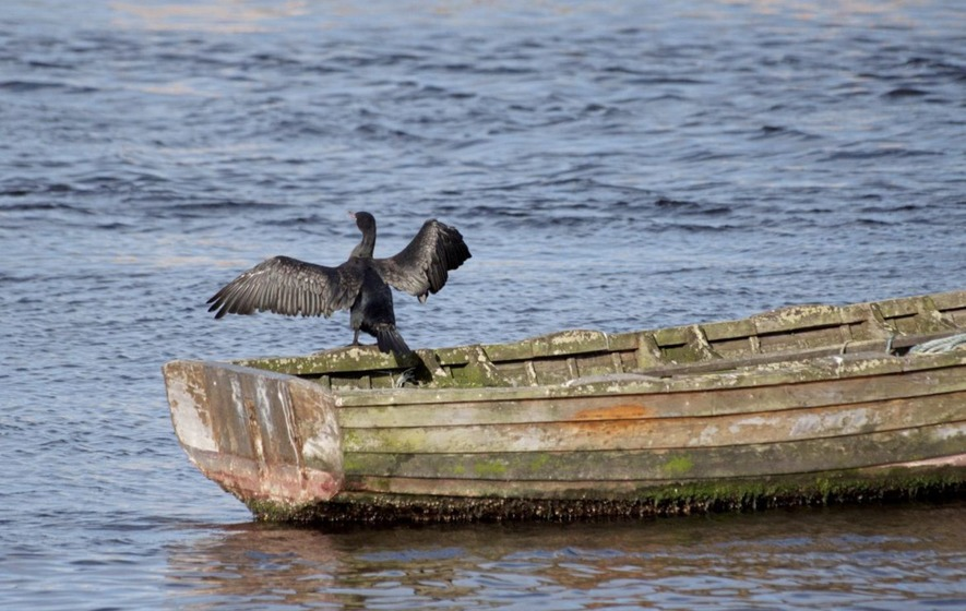 Take On Nature Cormorant S Links To Irish Cailleach And The Darkening Months The Irish News