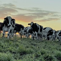 Dale Farm offers dairy farmers three year fixed milk price contract option