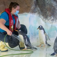 In Video: Behind the scenes at Sea Life Centre during lockdown
