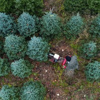 In Pictures: Tree-mendous start to Christmas preparations