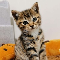 Charity celebrates rehoming 10,000 cats since start of lockdown